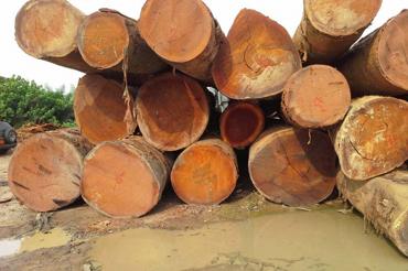 Products Singla Timbers Pvt Ltd